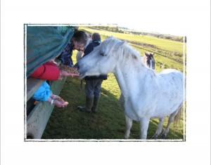 O(Tullyboy Farm - Feeding from trailer 7