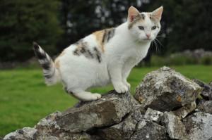 Q cat