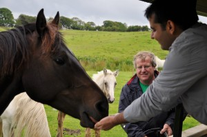 U feeding horses