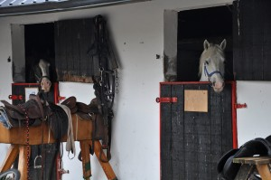 k horses in the stables