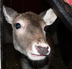 Bambi says hello