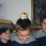 Chick on head